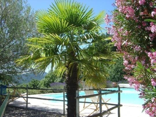Végétation méditerranéenne autour de la piscine