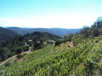 Vignes, oliviers et châtaigniers façonnent le paysage