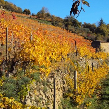 Le coteau de vignes et de châtaigniers de la famille Tourrette