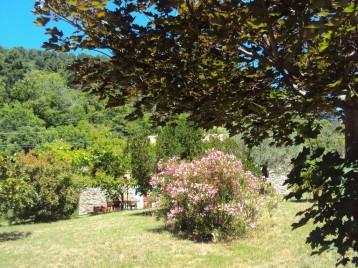 Grand terrain arboré et planté en oliviers, palmiers, cyprès de florence, figuiers, lauriers roses, arbousiers, magnolia