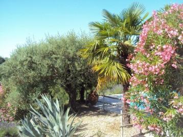 La piscine entourée d'olivier, palmier, aloès et lauriers roses