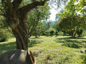 gite-ardeche-olivier-jardin